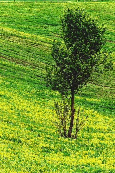 Plant Green Color Grass No People Growth Nature Day