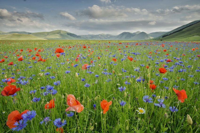 Piana di Castelluccio di Norcia Sony A6000 Samyang 12mm F2 Landscape Italy Eyeam_bestshot Italiadascoprire Castellucciodinorcia Fowers Fieldscape Fields And Sky