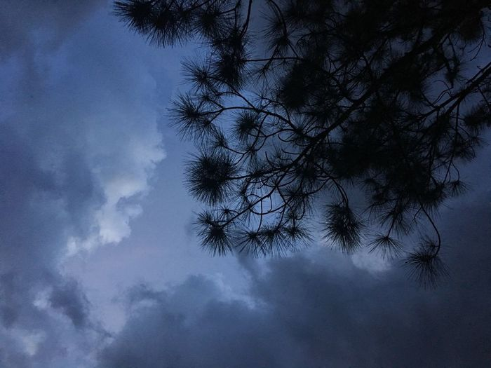 Clouds Cloud - Sky Clouds And Sky Pinetrees Tree Cloudy m Storm Cloud