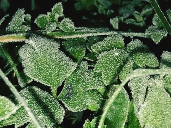 Winter Garden Green Color Growth Plant Leaf Nature Freshness Close-up Day No People Beauty In Nature Full Frame Outdoors Backgrounds Cold Temperature Winter In Poland Winter Landscape Eyeem Winter EyeEm Nature Lover Gress EyeEm Gallery Eyeemphotography Fresh On Eyeem  EyeEm Nature Photography