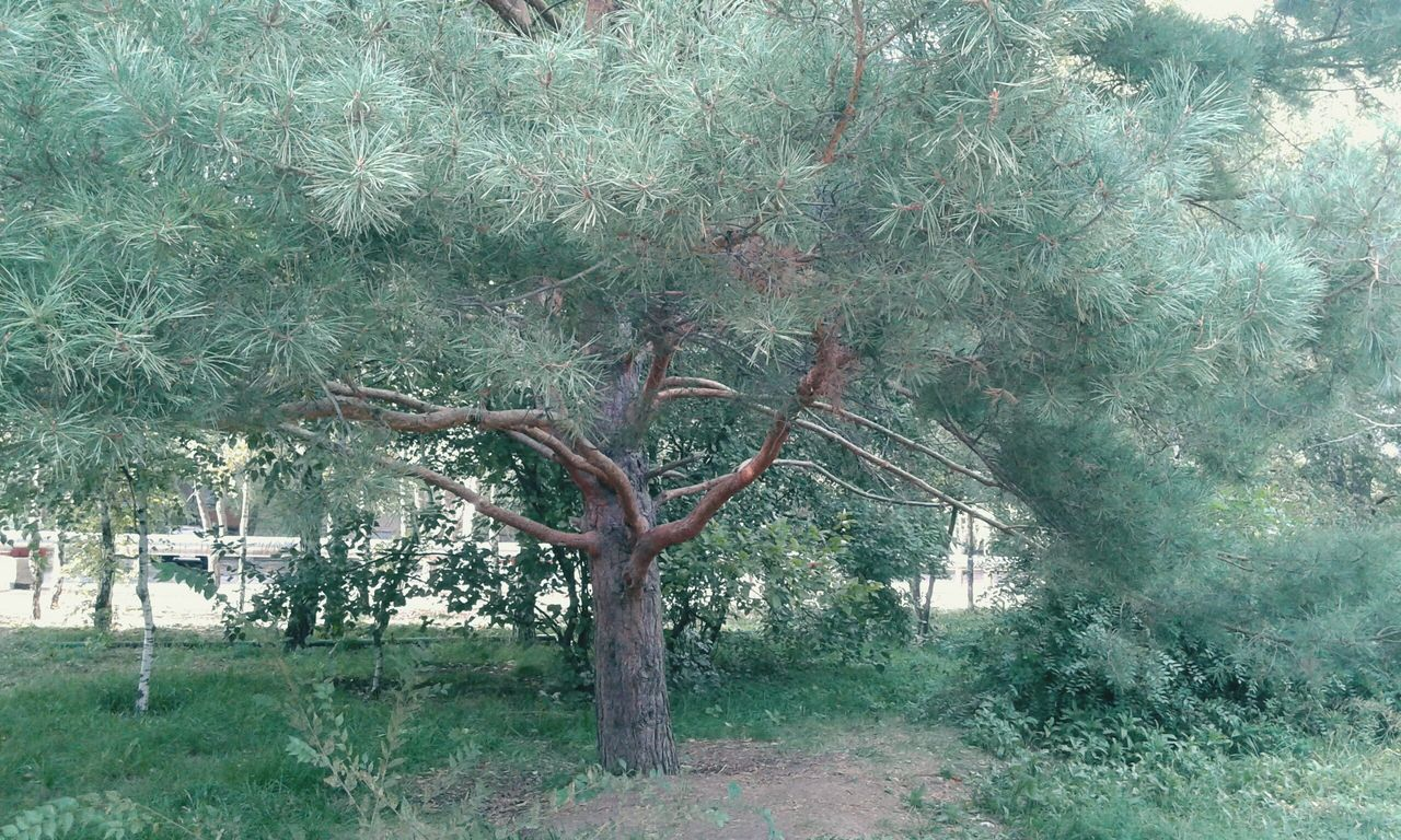 tree, branch, landscape, nature, outdoors, tranquility, no people, day, beauty in nature, tranquil scene, field, tree trunk, bare tree, scenics, growth, grass, lone, sky
