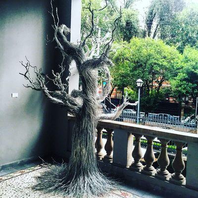 Silver  Tree Art Museum Old House ColoniaRoma LaRoma Balcony Cdmx Mexico