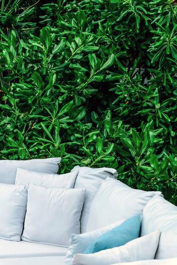 White sofa on grass against plants