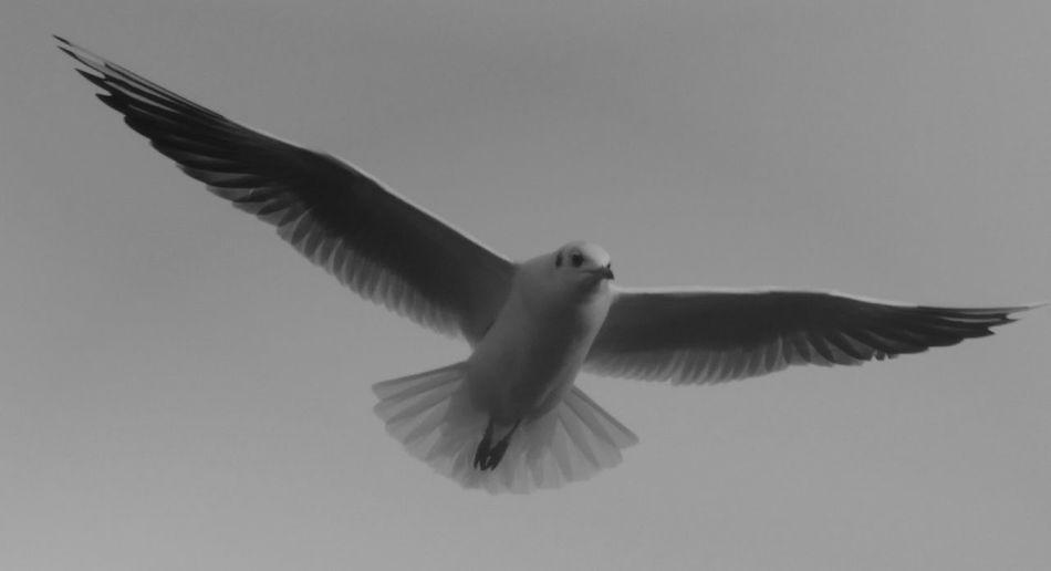 Einsamer fliegender Teufel Hanging Out Enjoying Life Animals Steinhude-am-meer.de - Dein Meer-Foto