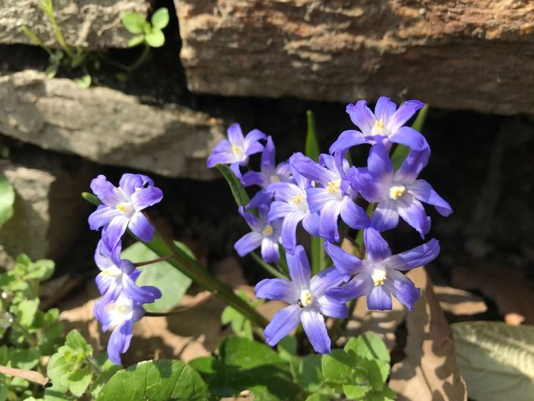 Flower Freshness Fragility Nature Beauty In Nature Purple Petal Plant Growth Flower Head Blooming Close-up No People Outdoors Day Landscape Springtime Spring Spring Flowers Spring Has Arrived Spring Is Coming  Flower Collection Nature Beauty In Nature
