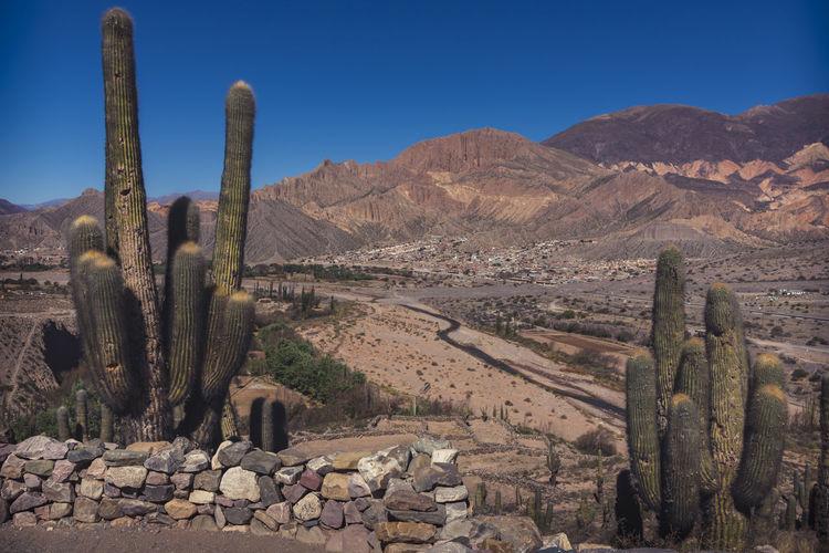 Cactus growing in desert against sky