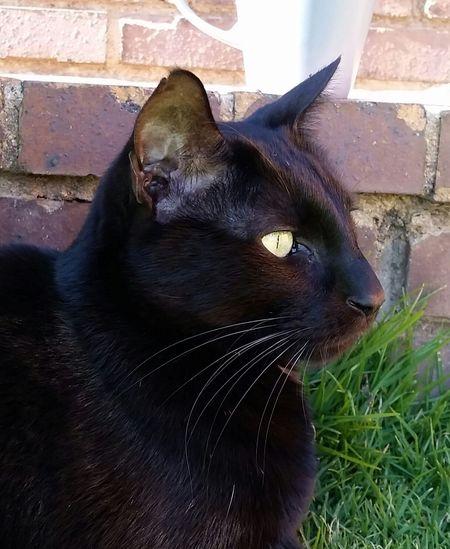 Catoftheday Cat♡ Cat Lovers Cats Of EyeEm Cats Caturday Needles Catlovers Cats 🐱 Caturday Cats