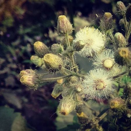 Furry Nature... Plant Plants L4l Gardens Gardening Nature Naturelovers Wild Mobilephotography Photo Photooftheday Pictureoftheday Picoftheday Instanature Instalike Instagood Instaplant Beautyofnature Naturephotography