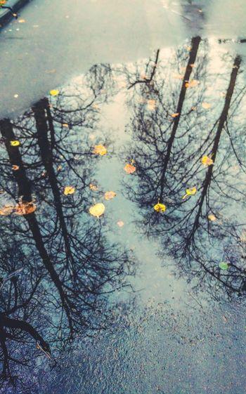 puddles Autumn