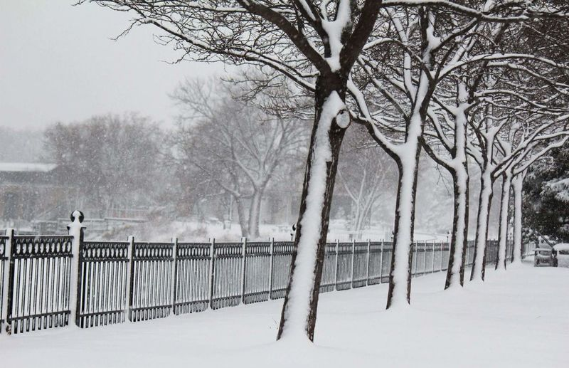 Cold Winter ❄⛄ Snow Minnesota Beauty In Nature Rail Railing _ Collection Trees