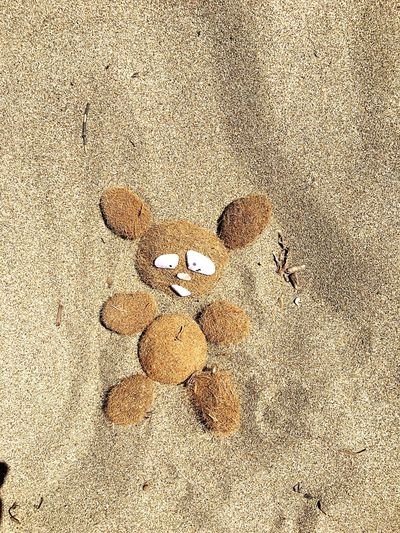 Background Backgrounds Lifestyles Wallpaper Beach Peluches Bear Little Bear Animal Summer Sand Fun Funny Holidays Sand & Sea Shell Summertime Love Lovely