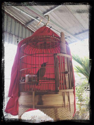 My birds ????? Mybird Bubaby Relaxing Beauty