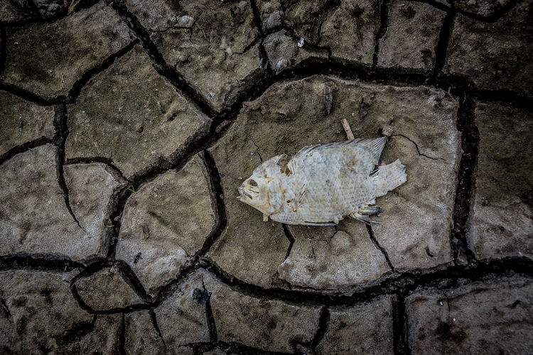 Death fish and ground crack Live for the Story Earth Dry Swamp Swamp Ground Dry Pond Full Frame Textured  Backgrounds Pattern Close-up Art And Craft