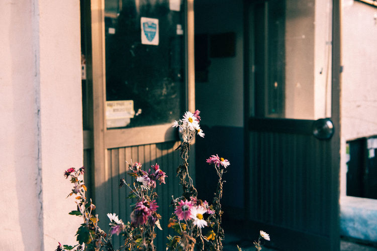 Flowering Plant Flower Plant Vulnerability  Fragility Freshness Nature Day Growth Beauty In Nature Architecture Close-up Petal Focus On Foreground Building Exterior Built Structure No People Flower Head Inflorescence Window Outdoors Flower Pot