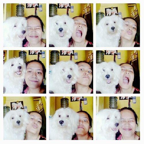 Instadog Malthese White Dog pet happy funny instalike like photooftheday ❤ ekspresinya itu lhoo lucu....
