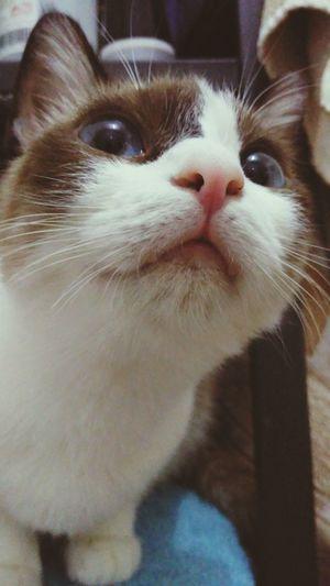 Showcase: November Cat Catsagram Catlovers Cookiethecat