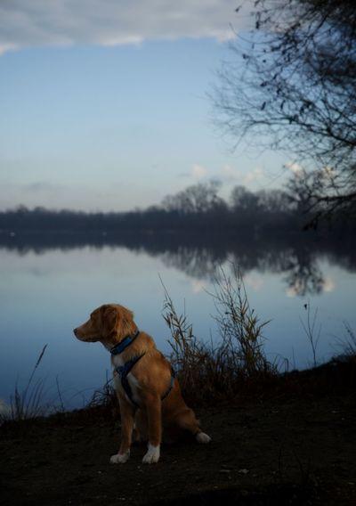 Dog standing on lakeshore