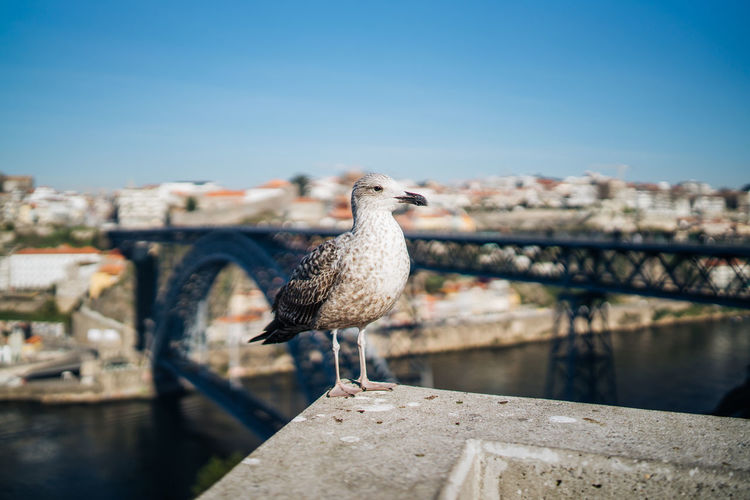 Seagull perching on railing against sky
