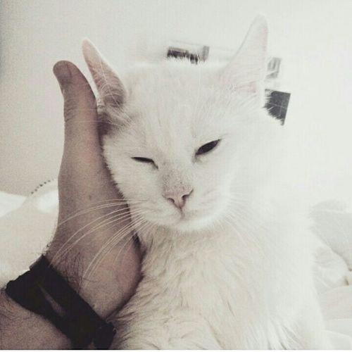 Pazar günlerini sevemedim hiç; iyi ki Şakir var. Haftasonu Pazar Izmir Kedicik Kediler Miyav Cat Cats Catstagram Pussycat Ilovemycat Photography