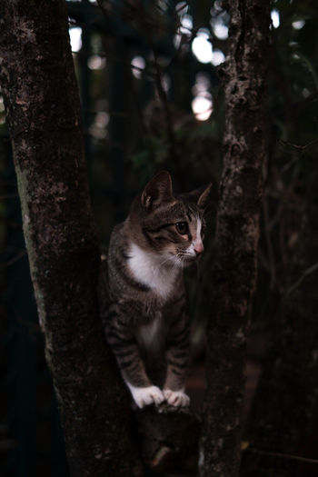 View of a cat on tree trunk