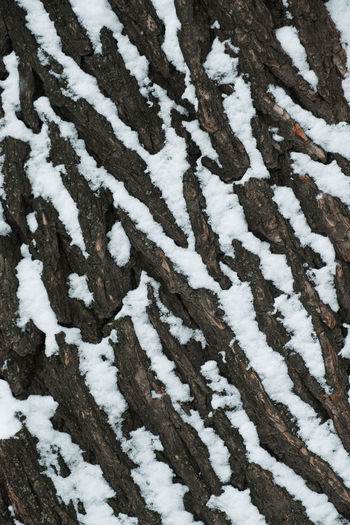 Close up texture of old tree trunk covered with snow Textures and Surfaces Backgrounds Wood - Material Cold Weather Wintertime Winter Snow ❄ Tree Trunk Seasonal Cold Temperature Nature Day Covering Tree Outdoors Full Frame Close-up Snowing Coniferous Tree Beauty In Nature