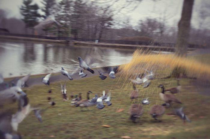 At The Park Birds Birdseed