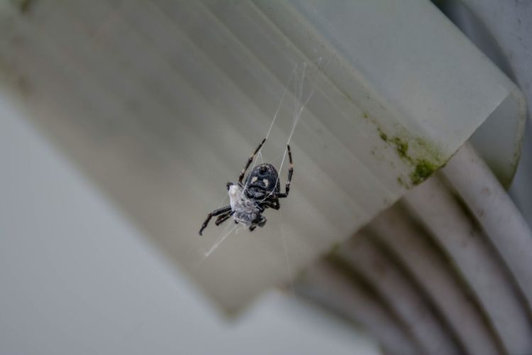 She is eating. What a feast. Picoftheday Spiders Eatingout Nikon