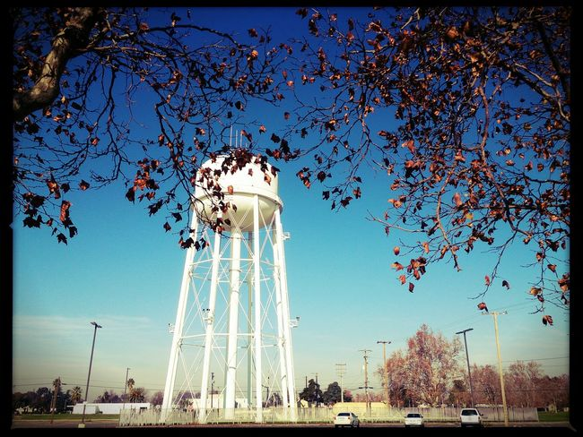 Sweet melancholy in every brown leaf. Mobilephotography Xperiagraphy Pocketcamera Lumiocam Pixlr No People Clear Sky TeamWeirdoForever Architecture TreePorn California