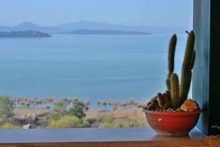 portrait of pot with succulent plant on the balcony, against a beautiful lake view background Succulent Plant Cactus Potted Plant Plant Beauty In Nature Focus On Foreground Tranquility Land Outdoors Flower Pot No People Scenics - Nature Mountain Lake Backgrounds Sky Water EyeEmNewHere EyeEm Best Edits EyeEm Nature Lover Trasimenolake