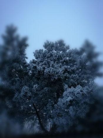 Tree Winter Clear Sky Defocused Sky Close-up