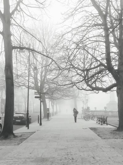 Misty memories Bare Tree Tree Treelined Branch Tree Trunk Weather The Way Forward Nature Tranquility Tranquil Scene Day Scenics Diminishing Perspective Outdoors Long Beauty In Nature Sky Fog