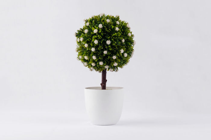 flowery plant Beauty In Nature Bonsai Tree Botany Close-up Day Fake Fake Flowers Fake Plant Flower Flower Head Flowers Flowery Fragility Freshness Green Color Growth Leaf Nature No People Outdoors Plant Plantation Potted Plant Studio Shot White Background