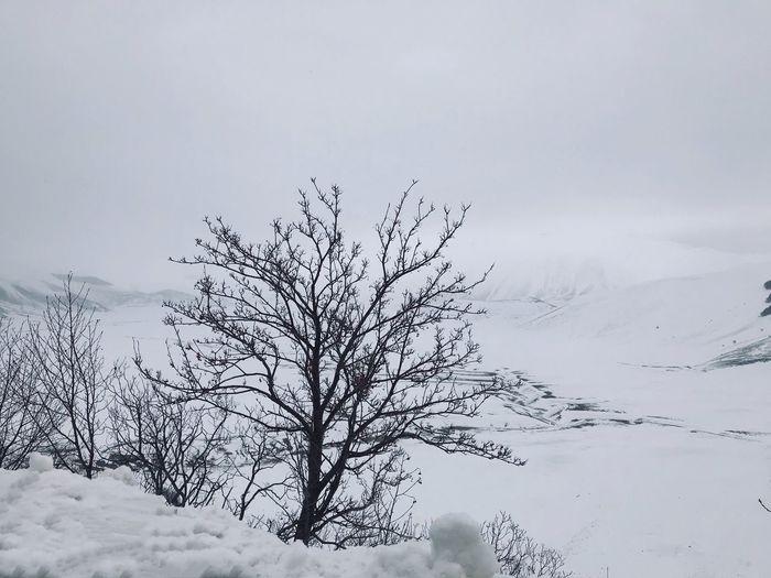 Snowcapped Mountain White Winter Cloud - Sky Fog Cloud - Sky Bare Tree Tree