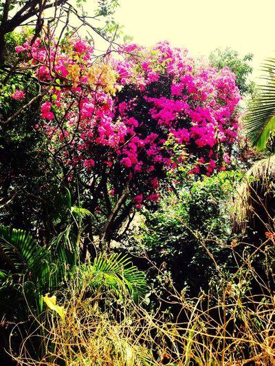 Beautiful Surroundings Flowers Taking Photos Hello World