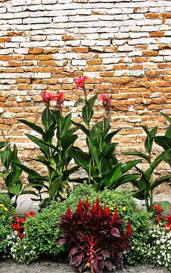Architecture Brick Wall Building Exterior Built Structure Close-up Day Flower Fragility Freshness Growing Growth Leaf Nature No People Outdoors Plant Potted Plant Red Wall Wall - Building Feature Father's Pic