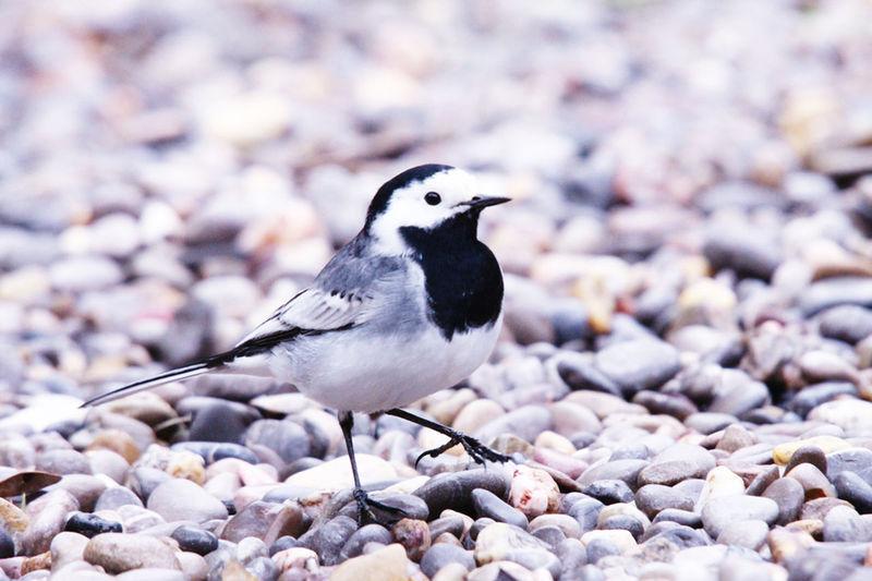 Ocell Bird Pasqüeta Bird Photography Birdwatching Birds Nature EyeEm Nature Lover Nature_collection Beautiful Nature