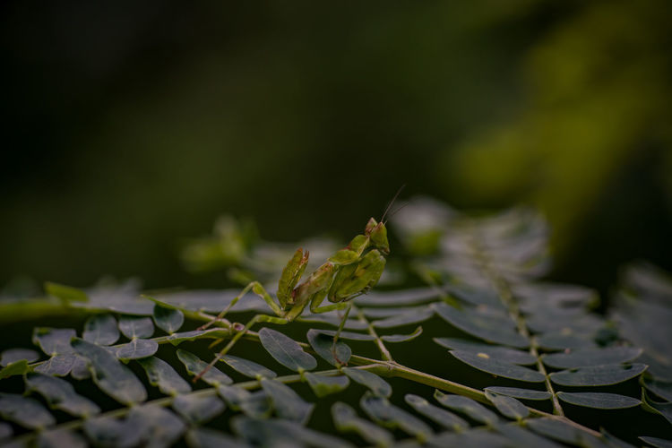 Close-up of insect on leaves