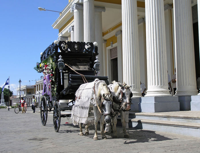 horse drawn herse in Granada Nicaragua Death Granada, Nicaragua Horse And Carriage Animal Architectural Column Architecture Building Exterior City Day Funeral Ceremony Herse Outdoors Street Traditional Transportation