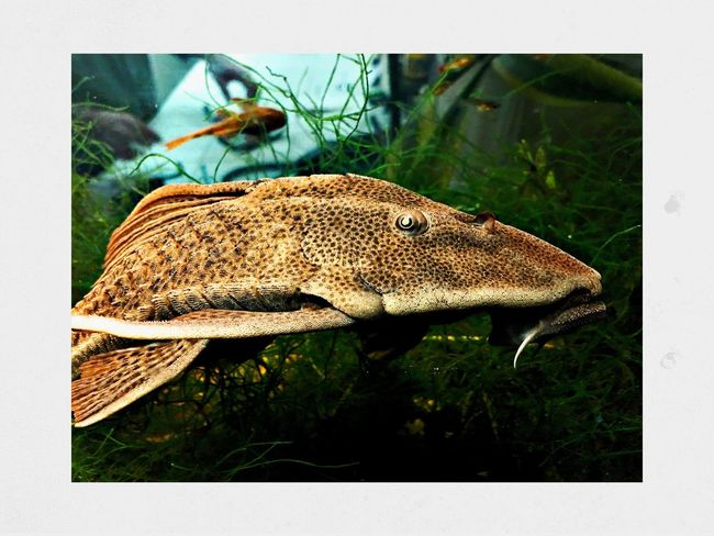 Fish tank Animal Animal Themes Animal Wildlife Animals In The Wild Transfer Print Auto Post Production Filter One Animal Invertebrate Close-up Day Insect No People Plant Vertebrate Animal Wing Reptile Nature
