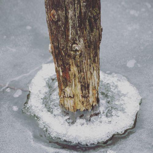 Festgefroren Day Steinhuder Meer Wood - Material Steinhude Winter Cold Temperature Nature Frozen Lake Water