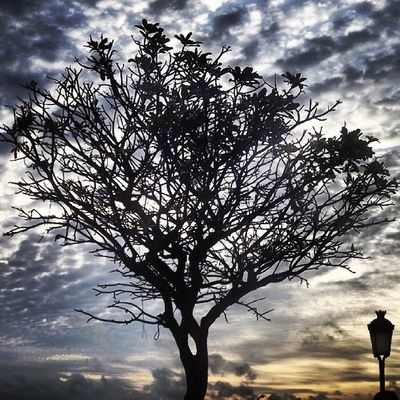 Tree with clouds and sunset Tree Clouds Sunset Abdurrahmanphotography icamdaily instasl gmy_instaAll picoftheday likeforlike capture_today instayon