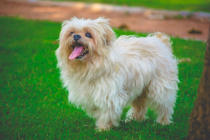 Animal Themes Day Dog Dog Love Dog Lovers Dogs Domestic Animals Enjoying Life Exceptional Photographs Eye4photography  EyeEm Best Shots Family Time Grass Nature No People One Animal Outdoors Pets Photoshoot Popular Photos They Are Family