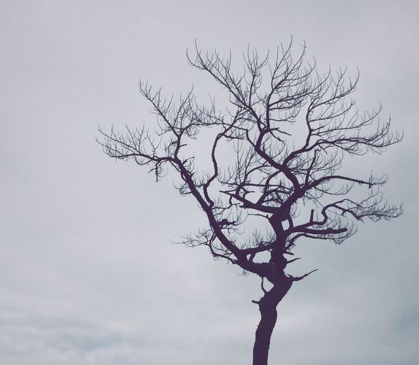 Bare Tree Branch Tree Low Angle View Nature Beauty In Nature Sky Lone No People Dead Tree