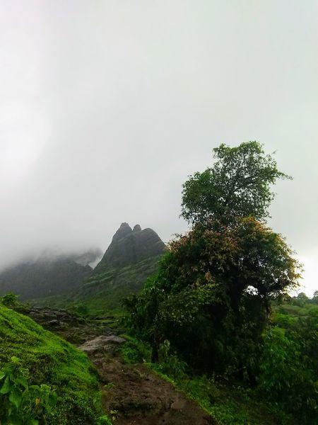 Mountain Outdoors Nature Tree Beauty In Nature Nature Reserve Fog Day Sky No People Kalavantin Durg Rainy Days Selfie Cam