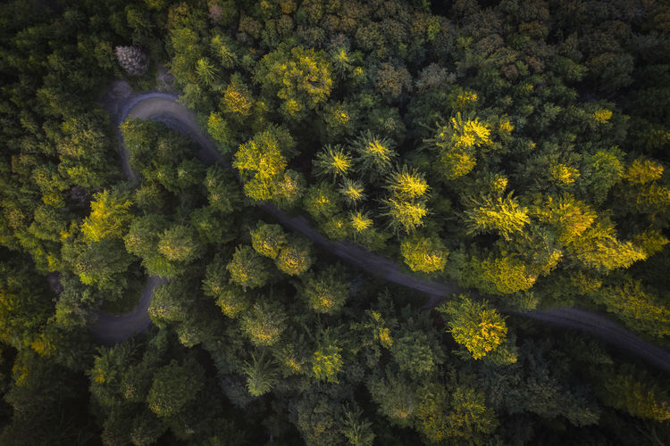 First autumn colors of the forest in the sunset landscape, road in a fores. Aerial Shot Drone  EyeEmNewHere Romania Aerial Aerial Landscape Aerial Photography Artistic Photography Autumn Beauty In Nature Directly Above Drone Photography Droneshot Forest Forest Photography Full Frame High Angle View Leaf Nature No People Outdoors Plant Road Sign Tranquility Tree