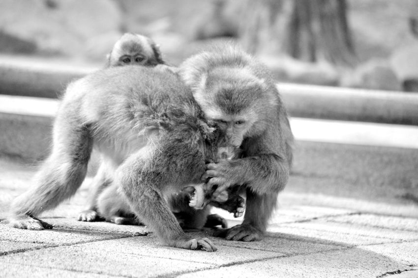 Quarrel Animal Themes Animals In The Wild Two Animals Animal Family Mammal Young Animal Togetherness Monkey Outdoors Nature Animal Wildlife