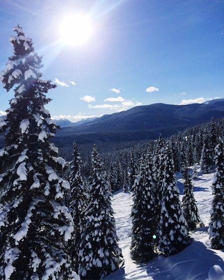 Snowboarding in Powder King Snow Canada Powderking Snowboarding Tree Landscape The Great Outdoors - 2016 EyeEm Awards