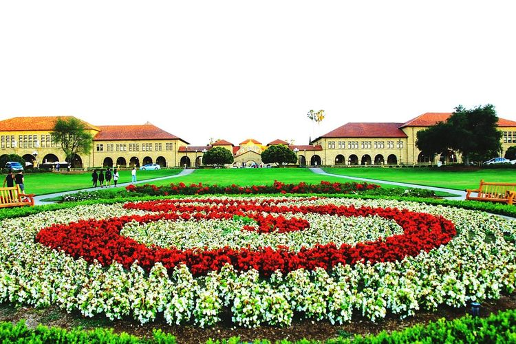 The world famous Stanford University, The Oval Wideangle Letterwithflowers Stanford Campus The Architect - 2016 EyeEm Awards
