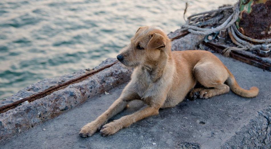 Full length of dog resting at harbor