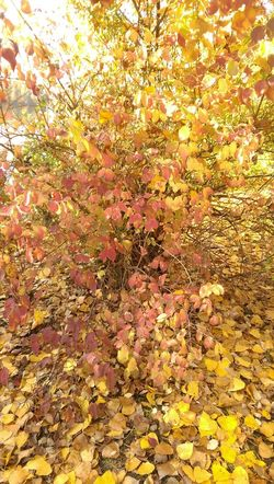Beauty In Nature Outdoors Leaves No People Close-up Multi Colored